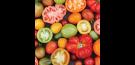 Tomatite ettekasvatus